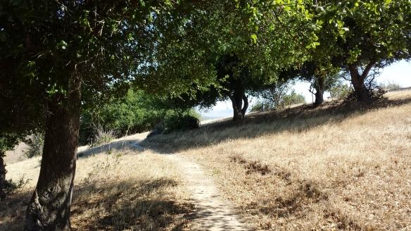 Crockett Hills trail