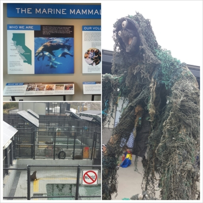 The Ghost Below Marine Mammal Center