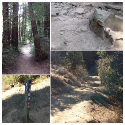 Redwood Regional Park, Tres Sendas Trail